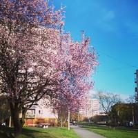 kérésre :) #miskolc #miskolcadhatott #tavasz #jókailtp