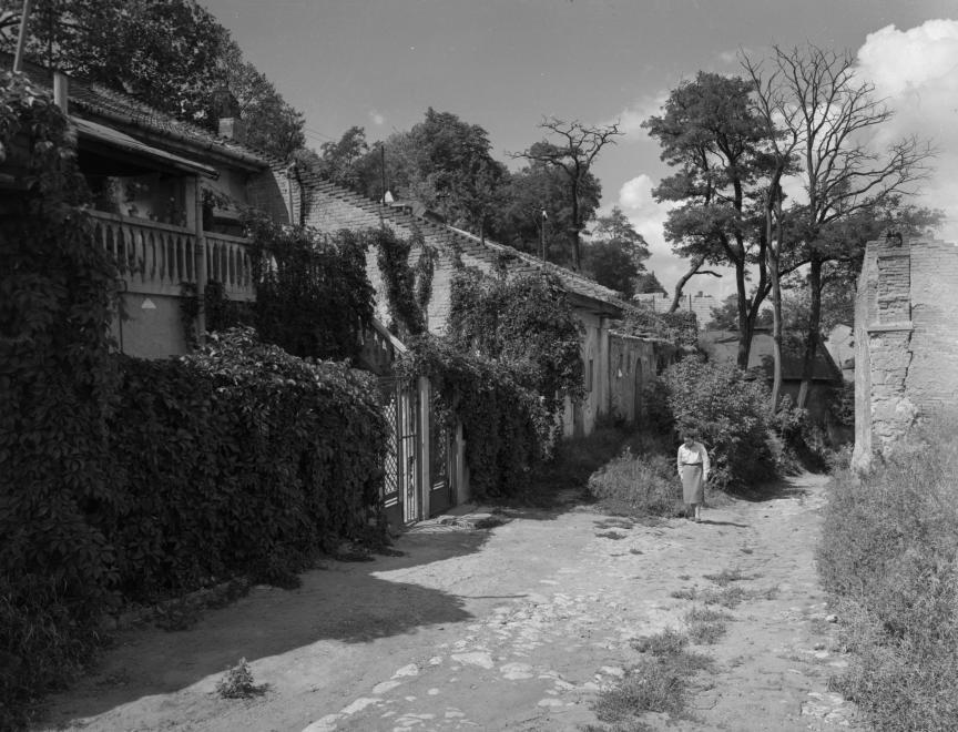 1960_kisavas.jpg