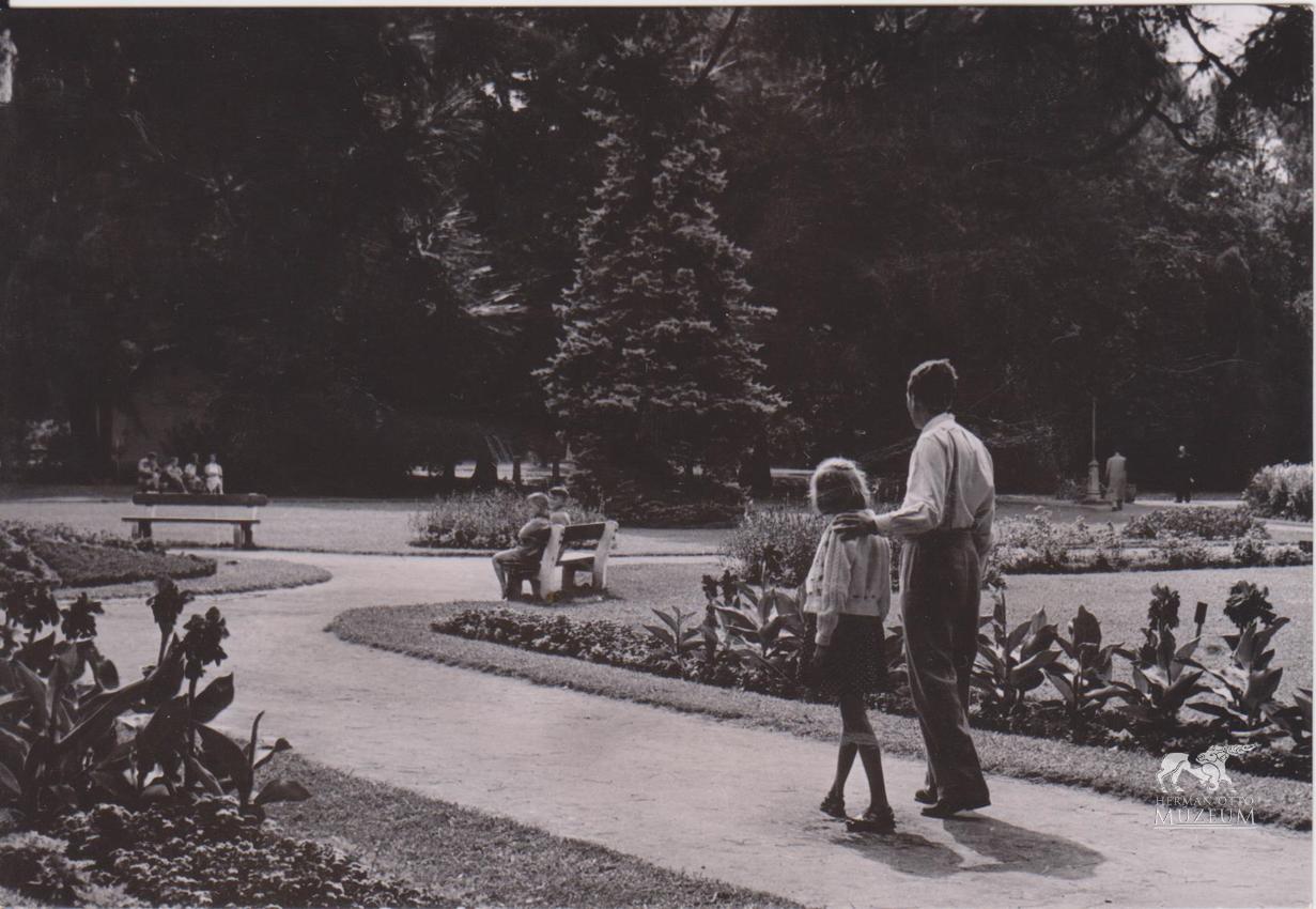 A tapolcai parkba 1920-ban egzotikus fákat és bokrokat telepítettek, amivel arborétum jött létre a területen.