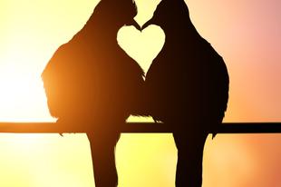 Öt tragikus történet a szerelemről - 2. rész