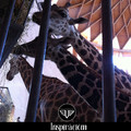 Állatfotók, állati fotogén állatokról
