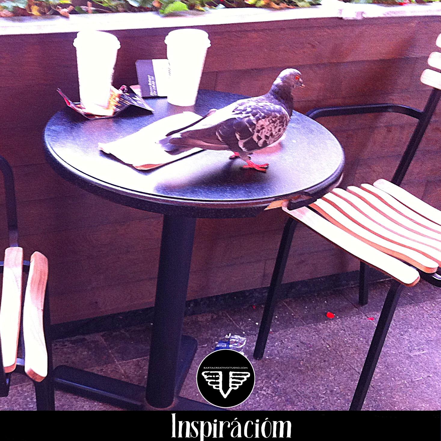 Ez a szemtelen galamb egy belvárosi kávézó teraszán válogatott az ott maradt morzsákból.