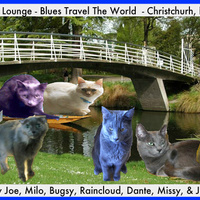 To Kiwiland With My Furriends