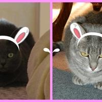 Happy Easter Furriends!