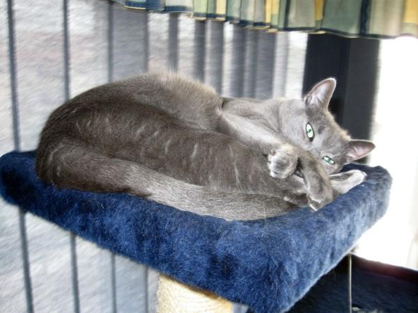 Missy taking siesta on top of Belvedere