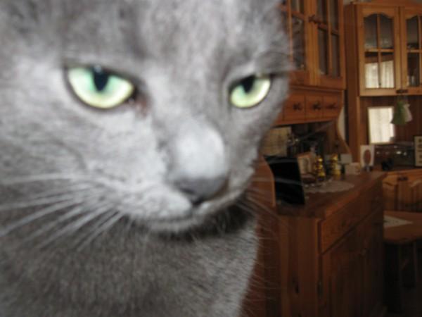 Missy close-up