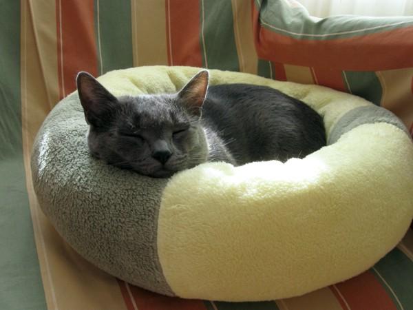 Missy in her weekend residence