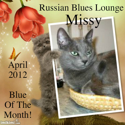 Missy Ms April of Russian Blues Lounge
