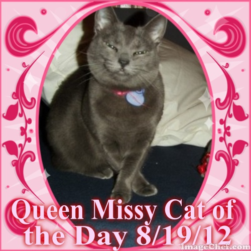 Cat of the Day on Catster from Bugsy