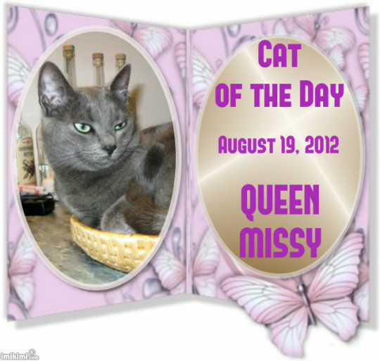 Cat of the Day on Catster from Manytoes
