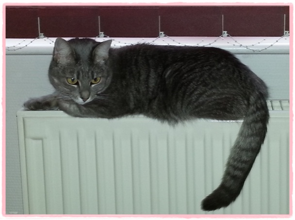 Lizzy on heater