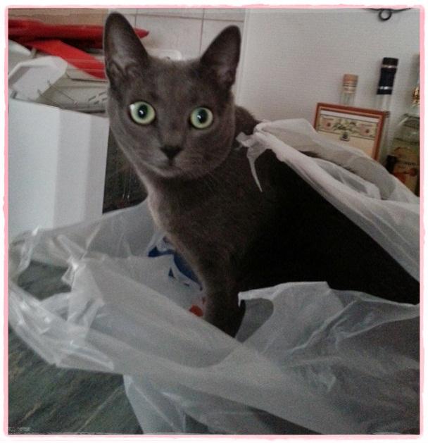 Missy in shopping bag