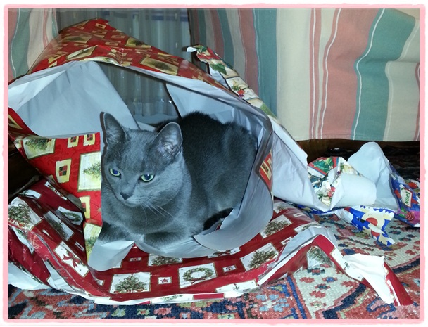 Missy in wrapping paper