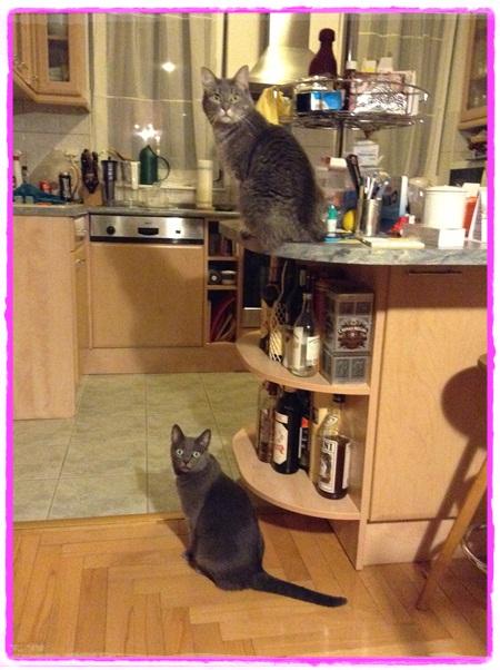 Monitoring cooking