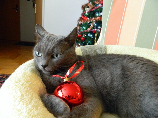 Missy and Christmas ornament