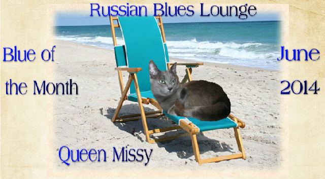 Blue of the Month in Catster's Russian Blues Lounge