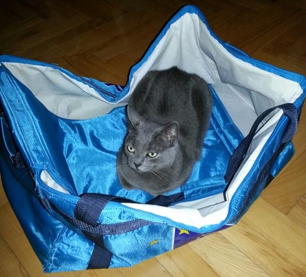 Missy_in_shoppingbag201408.jpg