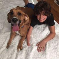 Szívmelengető képek gyerekekről és kutyáikról!