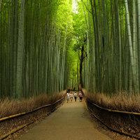 Különleges erdők a nagyvilágban!