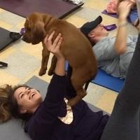 Pilates kutyarajongóknak!