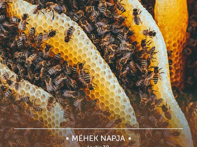 Miért is érdemelnek a méhek világnapot?