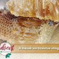A mézek varázslatos világa