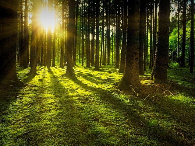 """""""Erdő nélkül a vihar céltalan"""""""