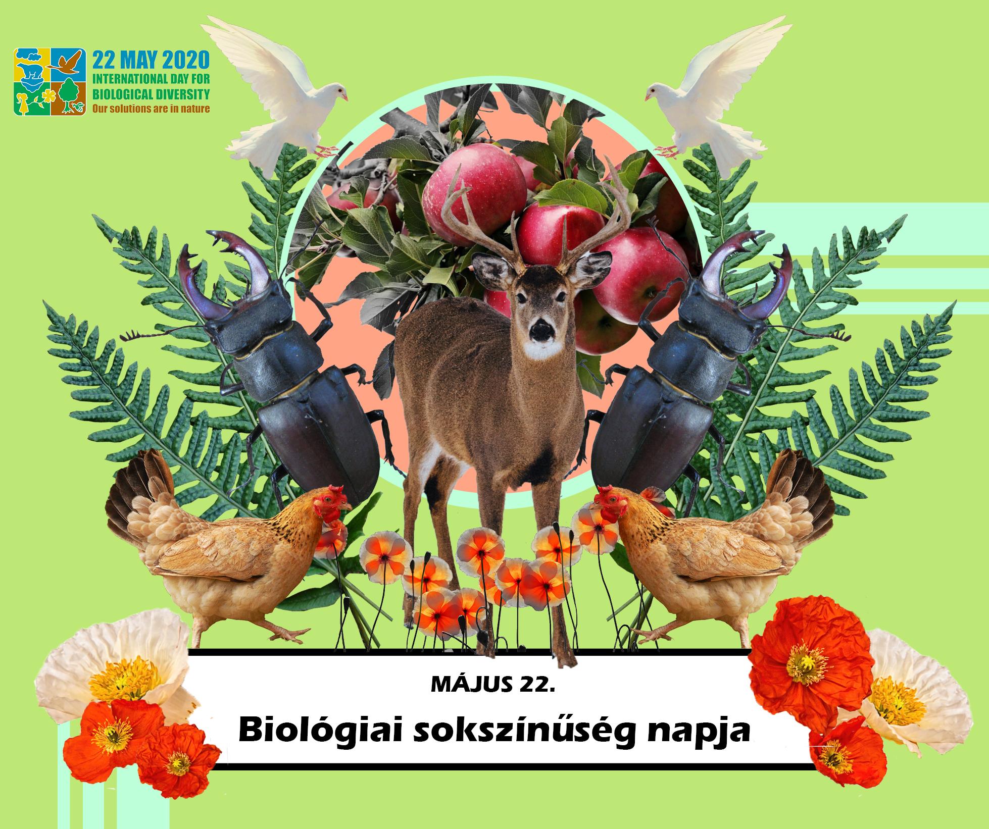 05_22_biodiverzitas_2.jpg