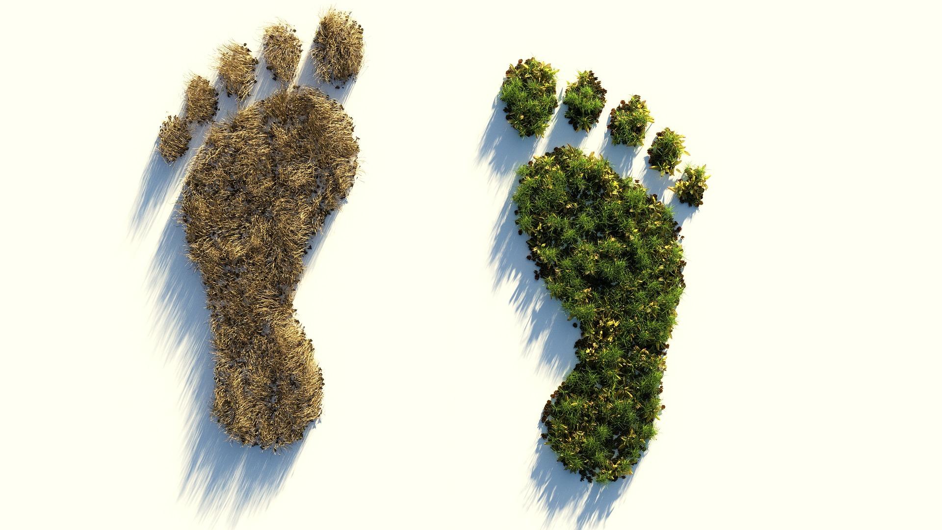ecological-footprint-4123696_1920.jpg
