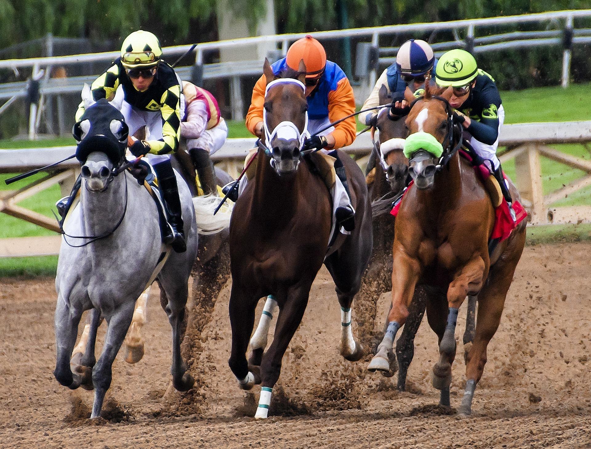 galoppverseny_horses-3811270_1920.jpg