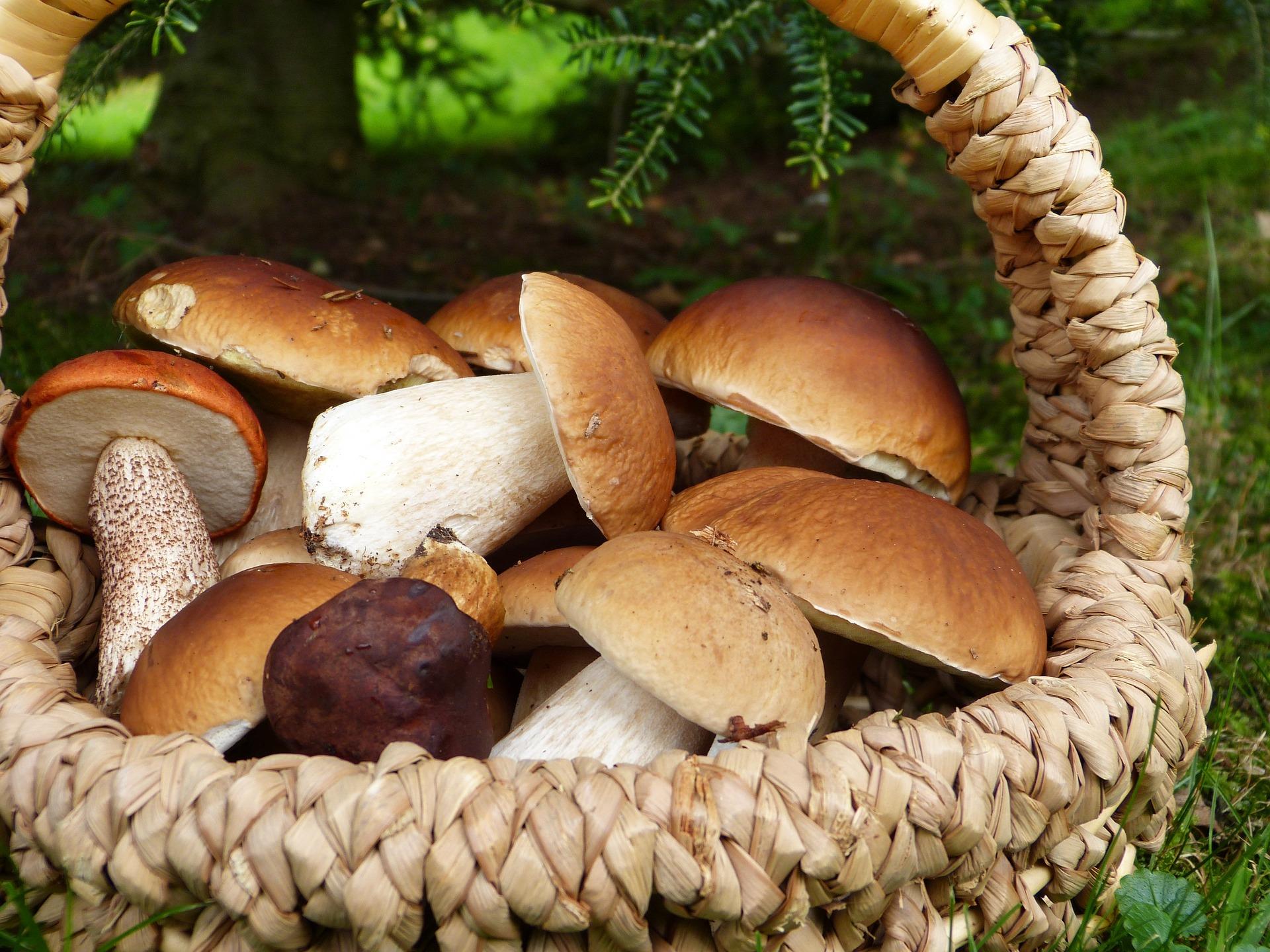 mushrooms-3686917_1920.jpg