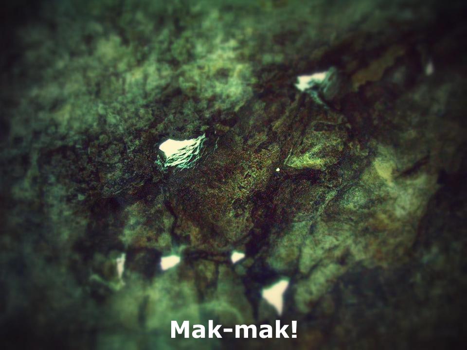 Barlang (1).png