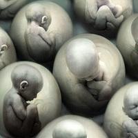 15 dolog, amit nem tudtál a klónozásról - I.