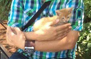 A vörös cica.jpg