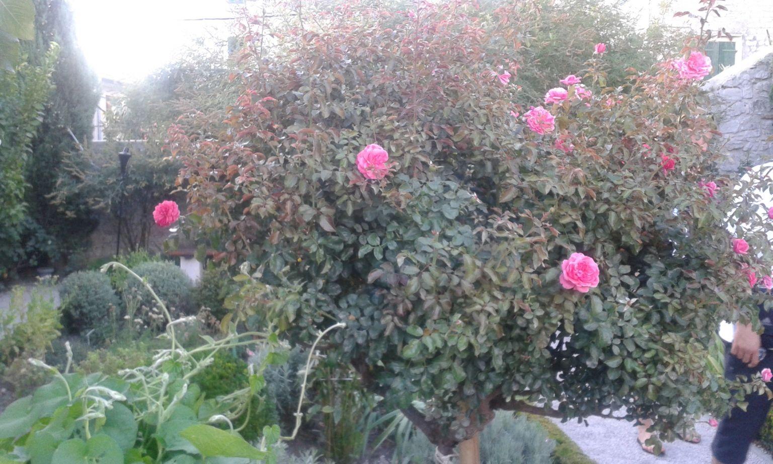 A Szent Lőrinc Kolostor mediterrán kertje