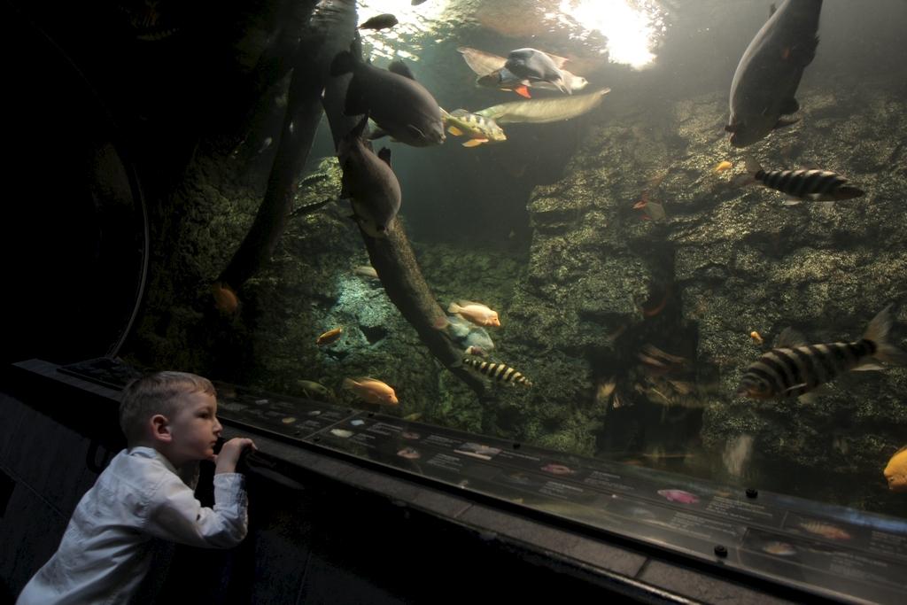 Akvárium (Forrás: www.obriakvarium.cz)