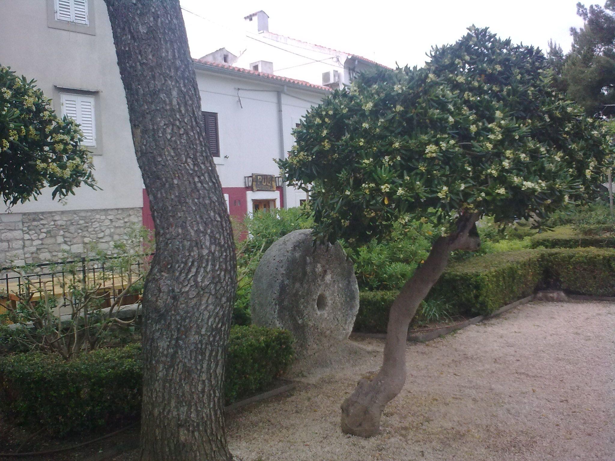 Illatozó fák