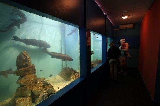 Baška akvárium (Forrás: www.akvarij-baska.com)