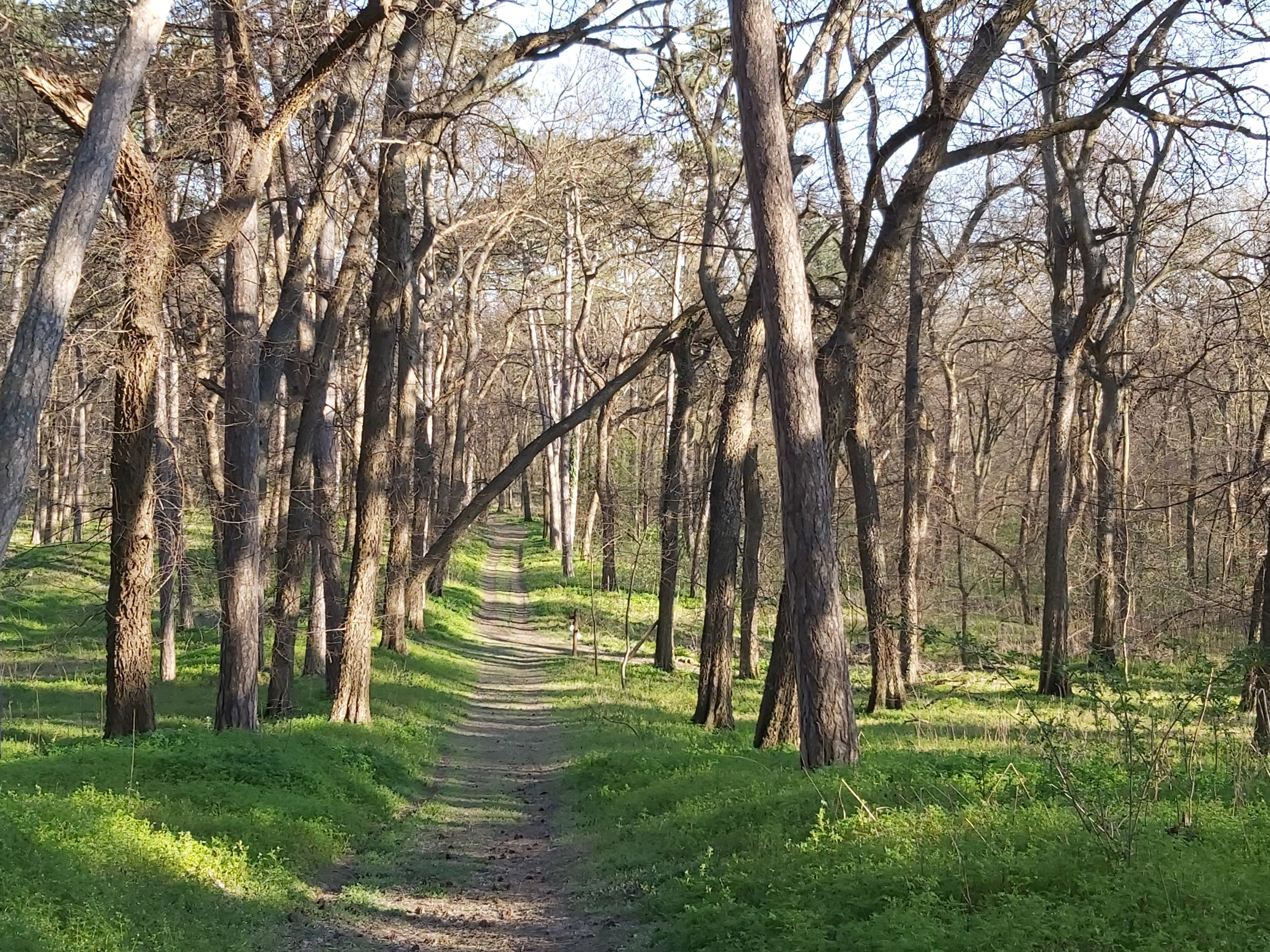 Tengelici erdő