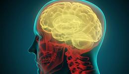 Az agykutatás 10 igazán meglepő eredménye