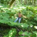 Az őserdő lapulevelekkel