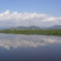 Skodra tó (Skadarsko)