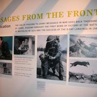 KÖNYV & KIÁLLÍTÁS: The Animals' War & Animals in War