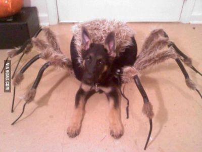 pók-kutya morgás joga.jpg