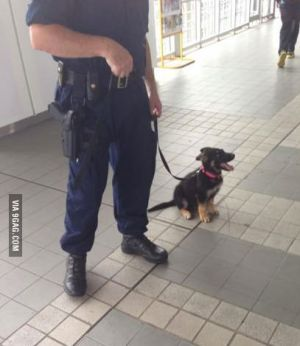 rendőrkutya morgás joga.jpg