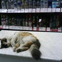 Moszkva cica