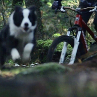 Bringás vs. kutya - ki a lejtő ura?