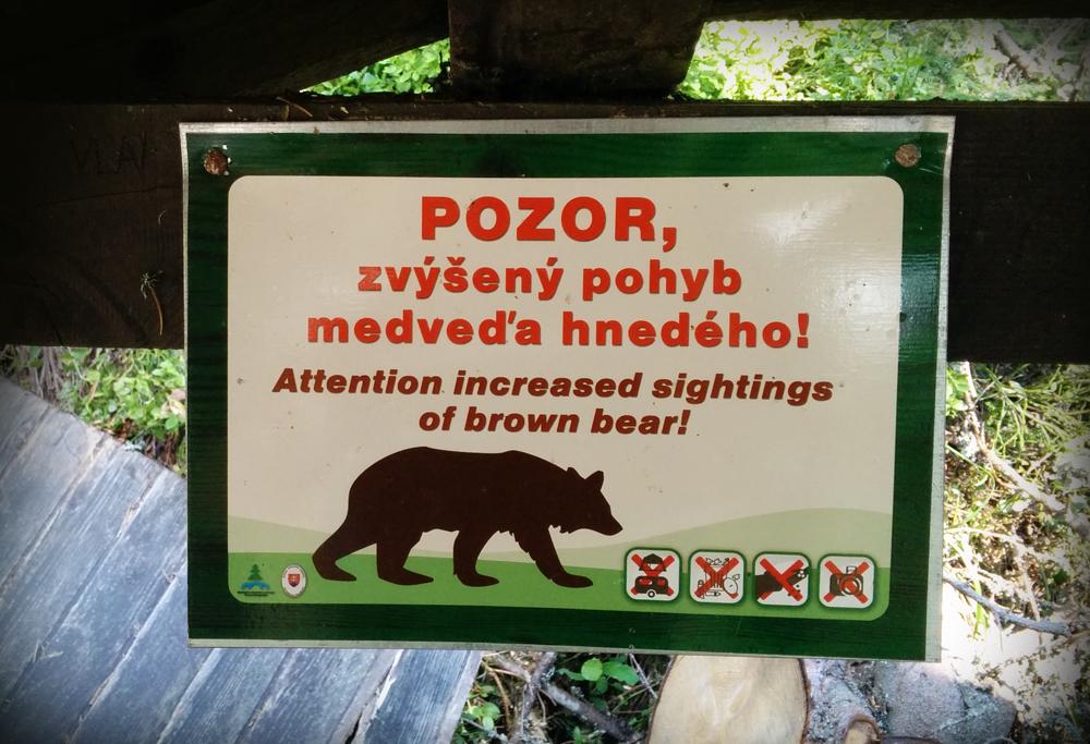 pozor medve.jpg