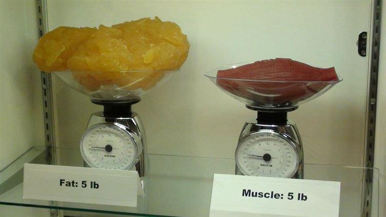 fat_muscle1.jpg
