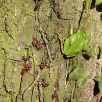 Irány a természet - Alcsútdobozi Arborétum